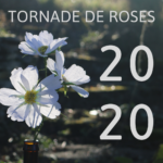 Tornade de Roses – Paper Flowers & Floral Decorations
