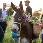 Hireashire Horse, Pony and Donkey Hire in SW France
